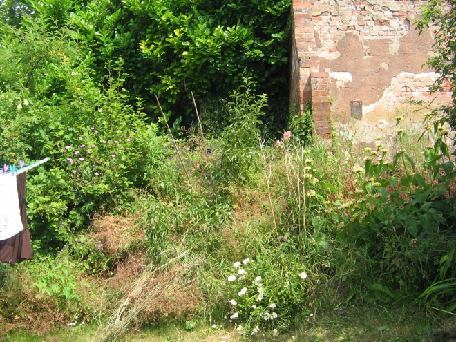 The overgrown back end of the garden I'm going to clear for a small veggie patch